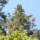 607.http   bioimages vanderbilt edu baskauf 67491.130x130